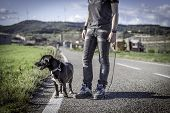 Man walking his dog on the road