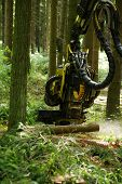 machine for cutting down trees