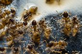 Tiny Household Ants