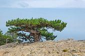Tree On A Mount