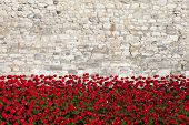Tower Of London And Poppies