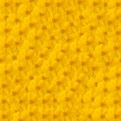 Yellow Cosmos Background