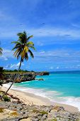 picture of caribbean  - Topical Palms at Bottom Bay , Barbados, Caribbean
