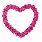 Frame Heart Of Zinnias Flower Isolated On White Background