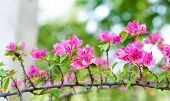 Pink Paper Flowers With Bokeh Background