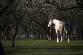 Horse in the orchard