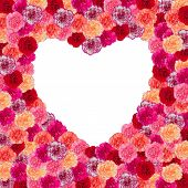 Heart Frame Of Carnation Flower Isolated On White Background