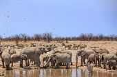 Herd of Elephants in Etosha Waterhole