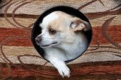 Image of missing puppy in the doghouse