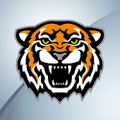 Tiger head mascot. Vector