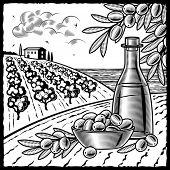 Olive harvest black and white. Vector