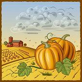 Landscape with pumpkins. Vector