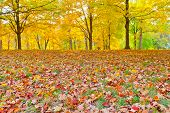 Colorful Autumn Foliage