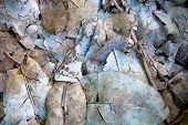 Dead Leaves And Twigs