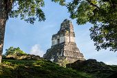 pic of mayan  - View of Mayan historic building at Tikal Jungle - JPG