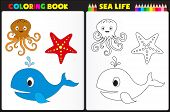 Постер, плакат: Coloring Book Sea Life