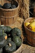 picture of acorn  - Wooden barrels of Acorn, Spaghetti and Kabocha Squash