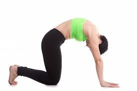 stock photo of ashtanga vinyasa yoga  - Beautiful sporty girl practices backbend in Cat yoga Pose Marjaryasana exercise for flexible spine and shoulders asana often paired with Cow Pose on the inhale yoga for relieving stress - JPG