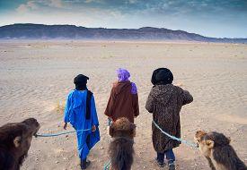 picture of camel  - Cameleer  - JPG