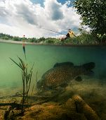 image of freshwater fish  - Split shot of the freshwater pond with fisherman above the surface and big fish  - JPG
