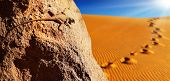 image of stepping stones  - Desert lizard on the rock against sand dune in Sahara Desert - JPG
