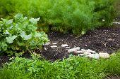 little organic/bio/permaculture garde
