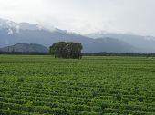 Vineyard in Marlborough New Zealand