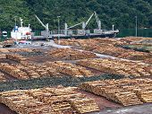 Stacked logs at dock in Marlborough Sounds, New Zealand