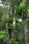 Rainforest - Lamington National Park