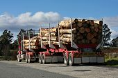 Long logging truck in Tasmania