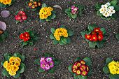 Colourful flowers in a garden bed