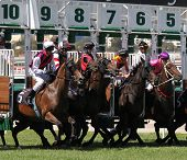 MELBOURNE - MARCH 13: Horses jump from the starting stalls in the Roy Higgins Quality, won by Elmore