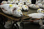 Gefrorenen Thunfisch auf Tokios Tsukiji-Markt