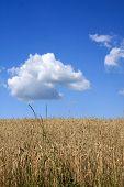 Plants in blue sky