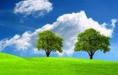 Twee groene eik op groen veld