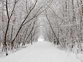 Winter alley