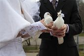 palomas de boda