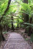 Triplet Falls Walkway