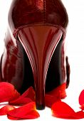 heel of womanish shoe with rose petals