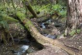 bosques de Muir