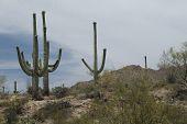 Desert sand landscape - series 05
