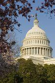 U.S. Capitol Washington D.C. series 14