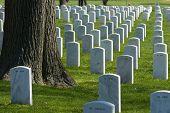 Arlington National Cemetery Washington DC travel series 67