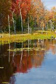 Colorful fall autumn leaf detail reflection vertical