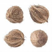 coconuts isolated on white background clipping path