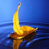 little boat make from yellow leaf