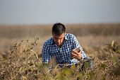 Satisfied Handsome Farmer With Tablet Squatting In Ripe Soybean Field Before Harvest poster