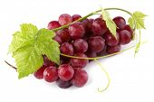 image of grape  - Red grapes with fresh leaves - JPG