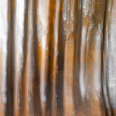 Blurred Tree Trunks At A City Park With Golden Autumn Leaves. Intentional Camera Movement Icm. Fall  poster