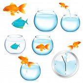 Goldfish und Aquarien, isolated on white Background, vector illustration